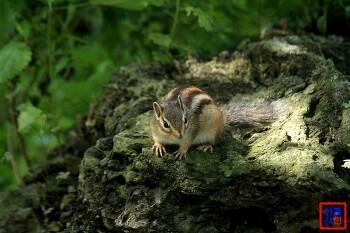 대구수목원에서 만난 귀요미 다람쥐
