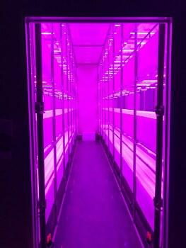 새싹삼 식물 공장 90%완공