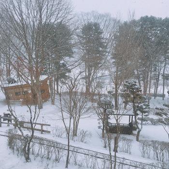 [남이섬/겨울] 새하얀 남이섬 생중계