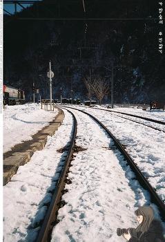 강원도 눈꽃환상(?)열차 여행