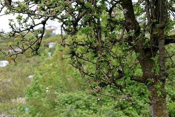 지구반대편 뿌에르또 몬뜨의 봄