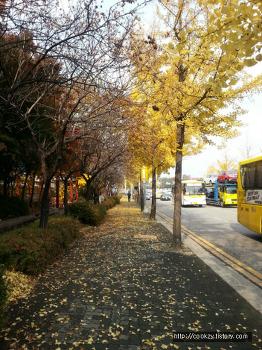 오리역 주변 가을 풍경