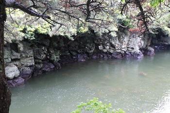 [제주도 여행] 초록빛깔 신비의 강과 바다 제주 쇠소깍