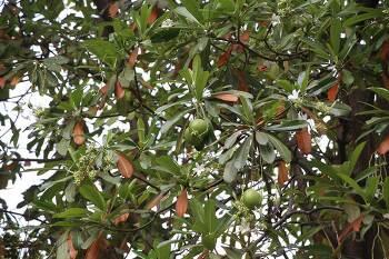 태국의 식물1