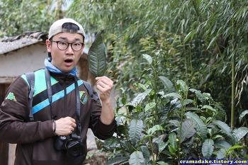 중국 운남성 여행 (부제 : 보이차 만들기 프로젝트, 한국 대구에서)