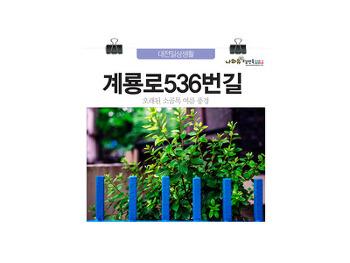 오래된 소골목 대전 계룡로536번길 여름 풍경
