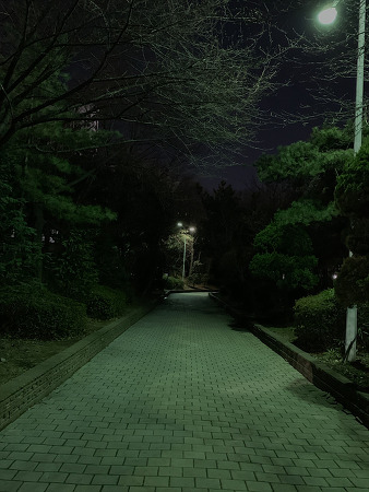 190324 _ 밤 산책 (아이폰XS사진)