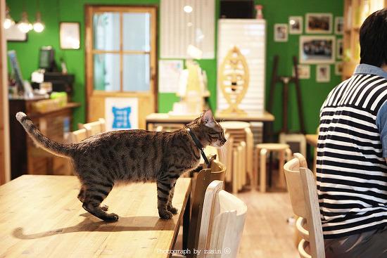 책과 고양이가 있는 문화공간 홍대 초록리본 도서관