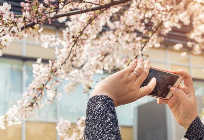 봄꽃 사진 찍을 때 유용한 '무료 사진보정 어플'