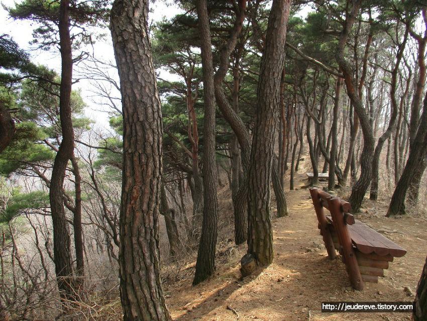 광덕산 산행2 (아산, 3월말), 소나무가 울창한 숲
