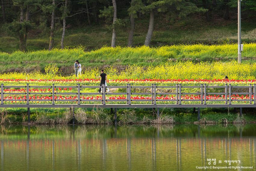 남해에도 봄꽃들이 가득. 튤립, 유채꽃과 즐거운 봄 산책