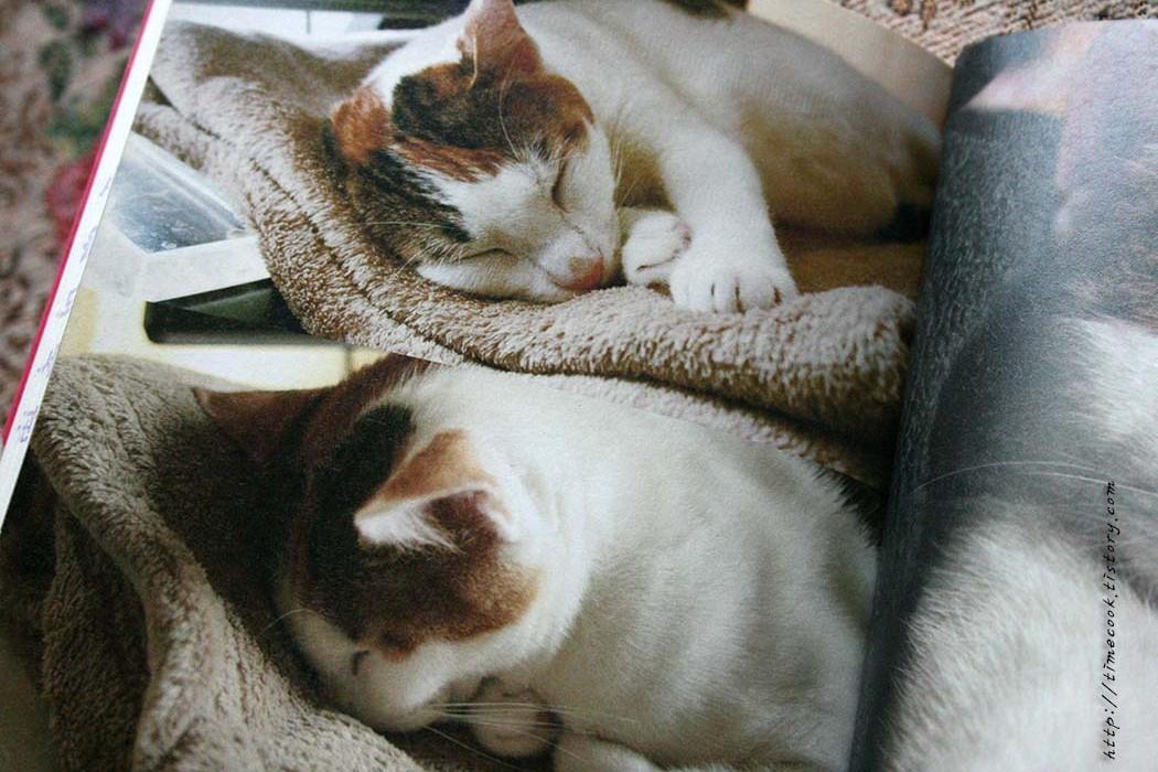고양이책, 고양이책 리뷰, 처음이야 고양이랑 같이 사는건, 고양이랑 같이 사는건, 고양이책 추천, 고양이책 소개, 고양이 정보, 고양이