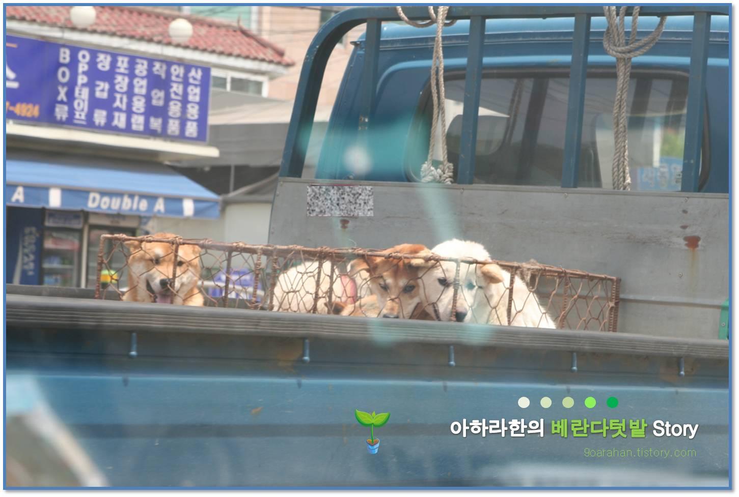 [개고기 논란] 개고기 문화, 개고기 반대?, 개고기 찬성?