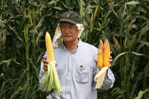 농장에서 수확한 옥수수를 들고 계신것