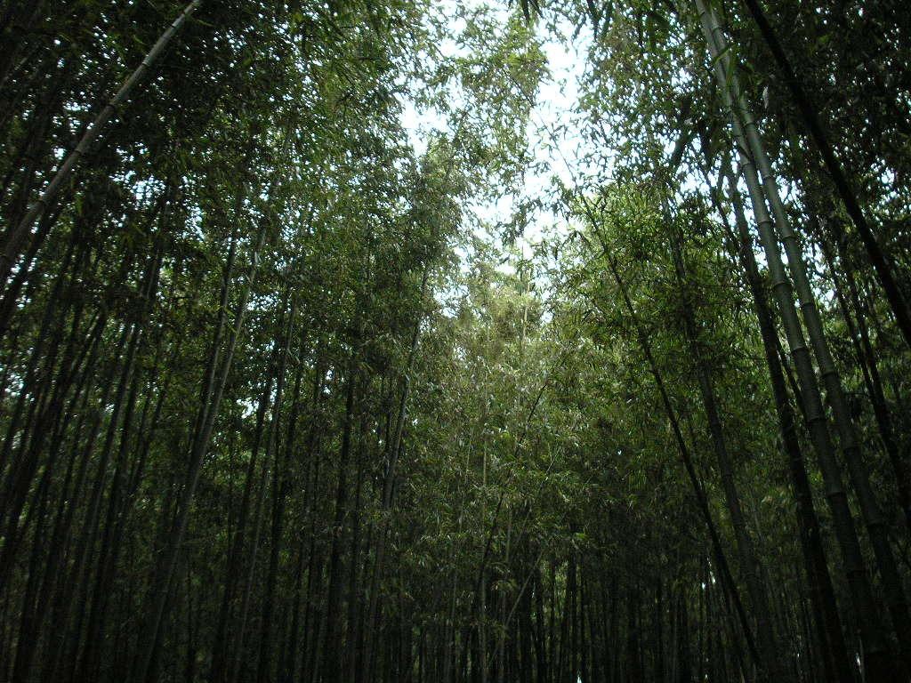 2009 RCY 국토순례훈련 담양 죽녹원