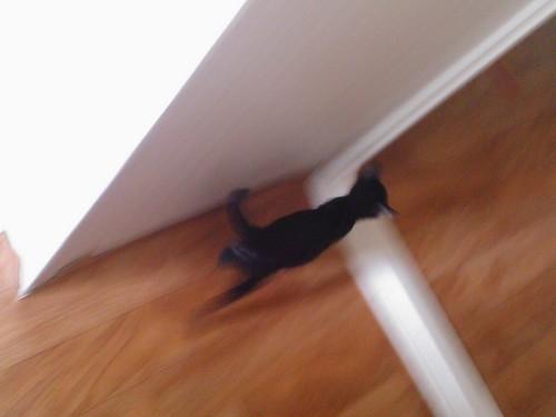 뛰어다니는 둘째 고양이, 잉크