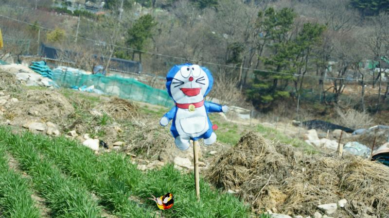 稻草人,scarecrow,かかし,허수아비