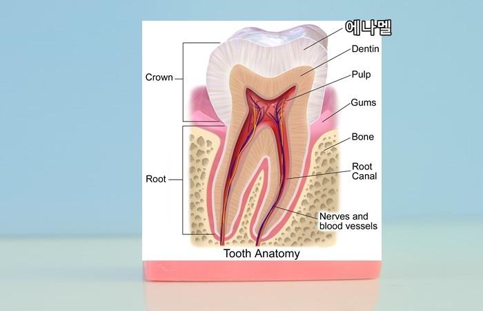 사진: 법랑질, 즉 에나멜의 모습. 치아의 맨 바깥쪽을 감싸고 있는 사기그릇같은 재질을 법랑질이라고 한다. [증상별 치약 성분 - 치석과 치태, 입냄새, 잇몸병 치약 고르기 요령]