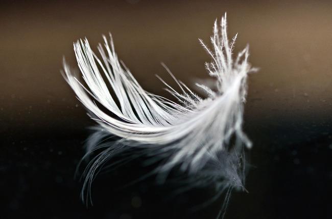 사물 사진,깃털