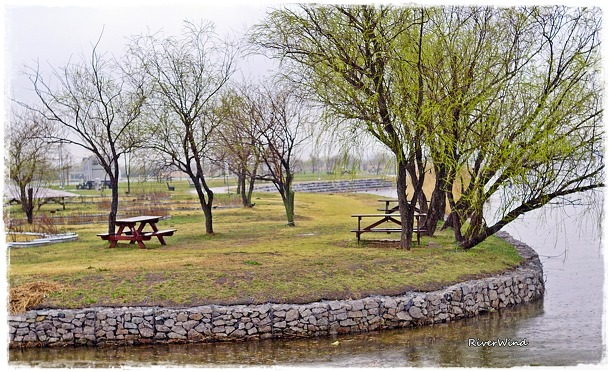 봄비오는 삼락공원(三樂公園)