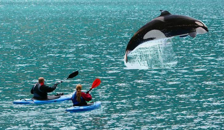 범고래 관찰 투어하기입니다