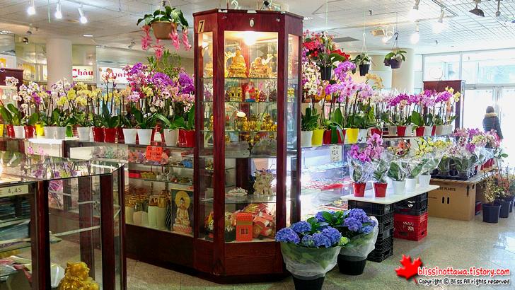 캐나다 토론토 차이나타운 꽃집