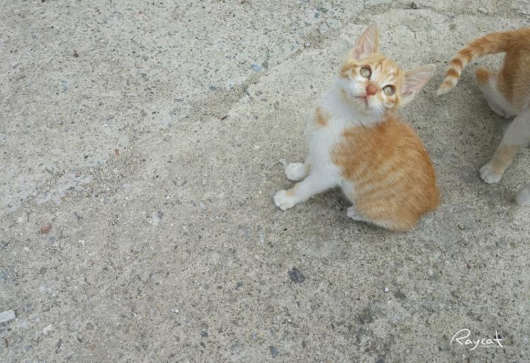 길고양이 꼬마
