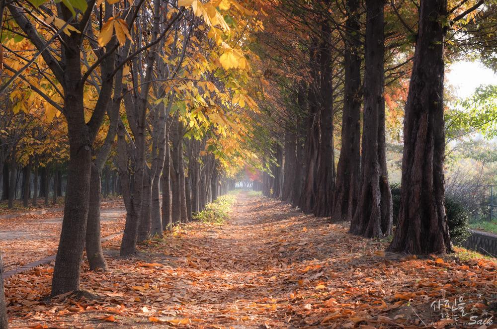 소소한 가을 사진 모음