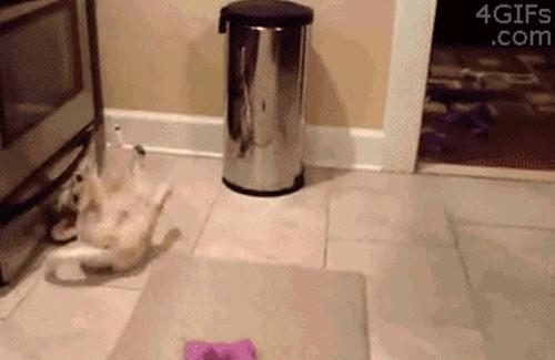 강아지 신기술 4