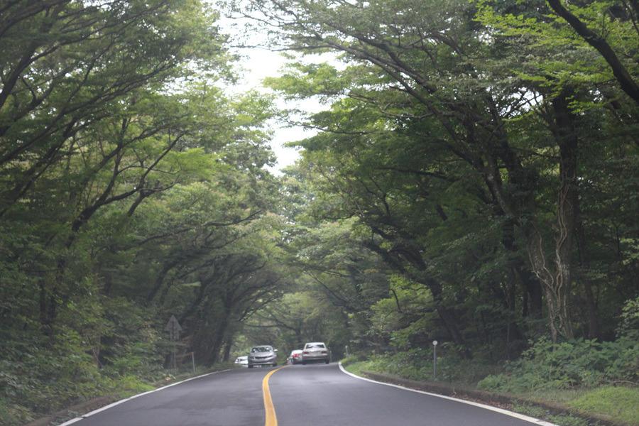5.16 도로에서 만나는 낭만적인 숲터널