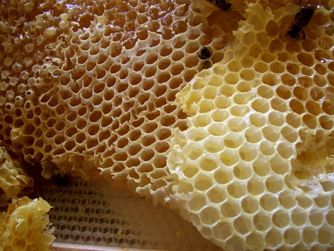 꿀, 로열제리