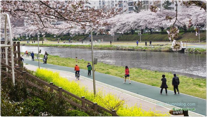 온천천 카페거리 앞의 봄풍경