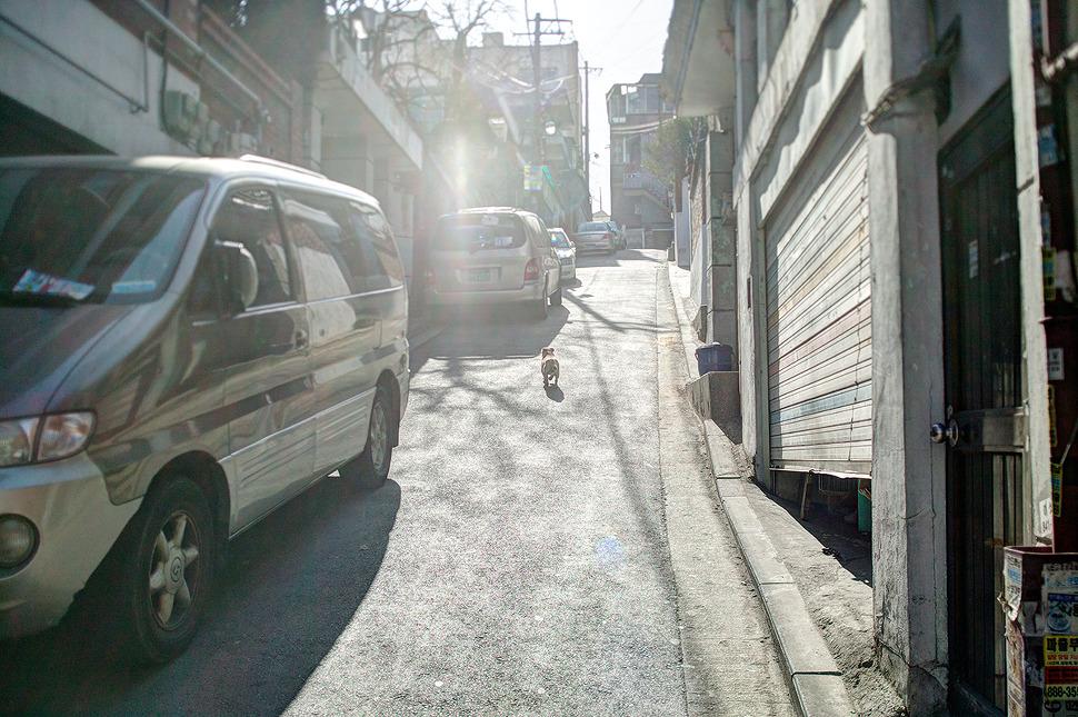 해질녘 집으로 돌아가는 강아지 사진