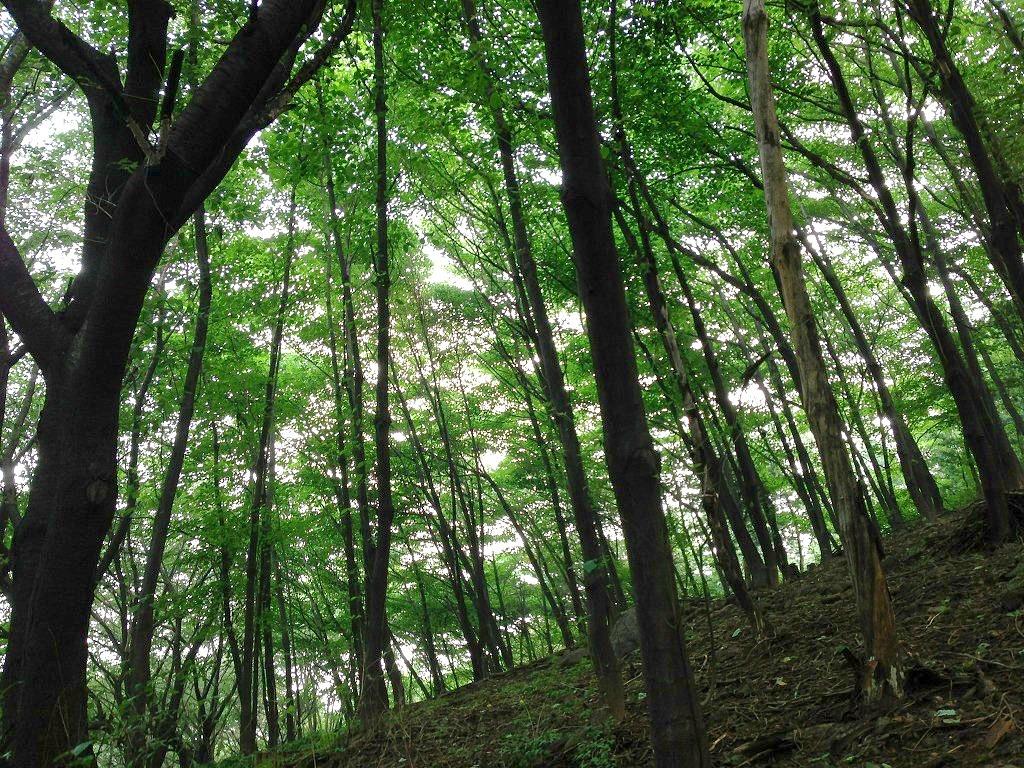 안산 메타세콰이어 숲과 창덕궁 멧돼지