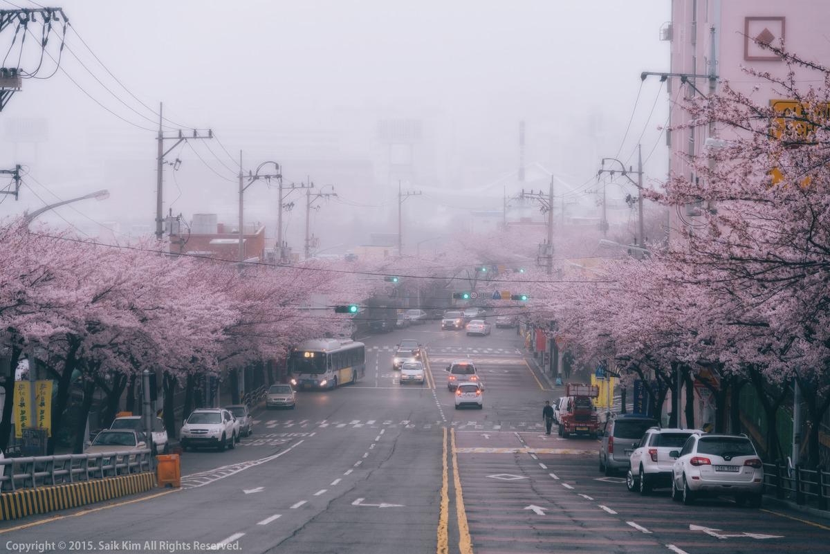 봄비 내리는 꽃마을로의 벚꽃길