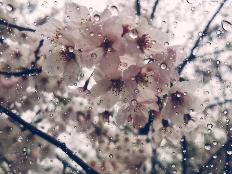 비오는 날의 수채화