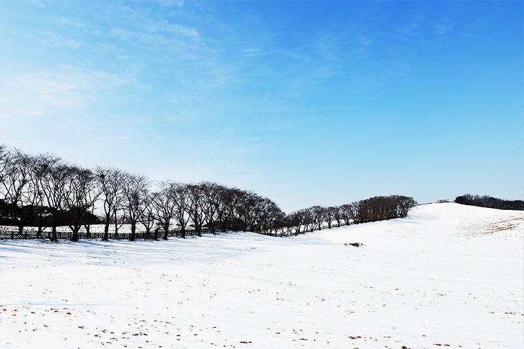설원 여행지 서산 용유지 용비지 겨울사진