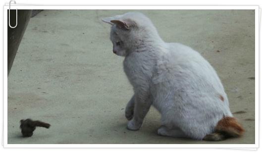 내가키운 새끼고양이 재롱잔치