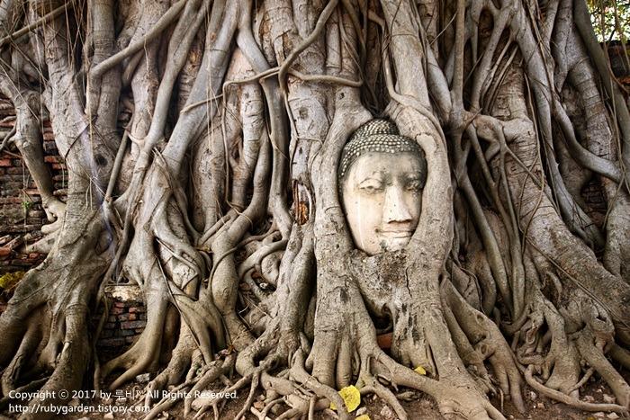 태국 여행 / 세계문화 유산 고대도시 '아유타야' 1일 투어 / 나무 뿌리에 휘감긴 불상 '왓 프라 마하 탓(왓 마하 탓)'