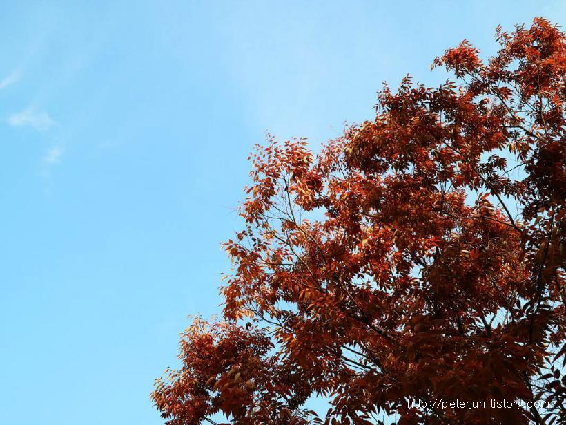 하늘과 단풍잎