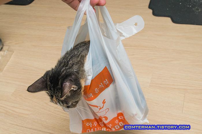 고양이 비닐봉지 놀이