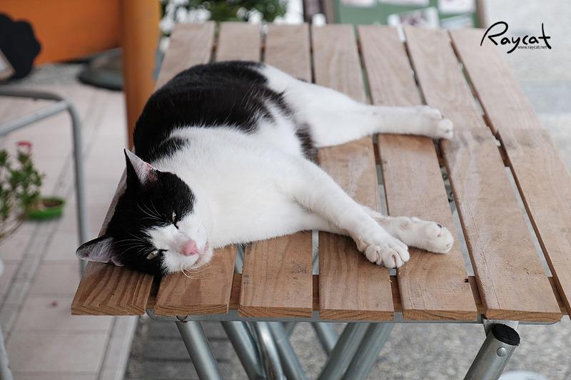 허우통 고양이 마을 카페 고양이