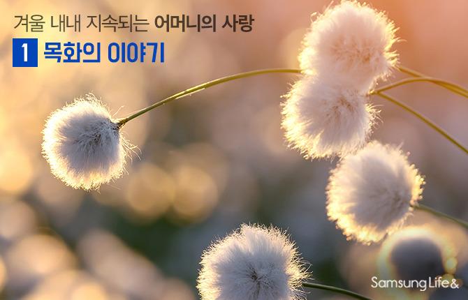 목화 꽃 꽃말