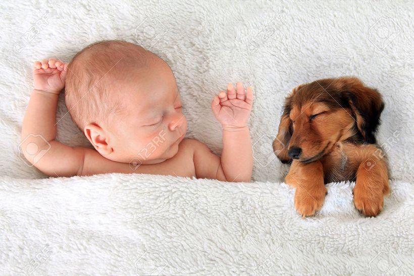 자는 아이와 강아지