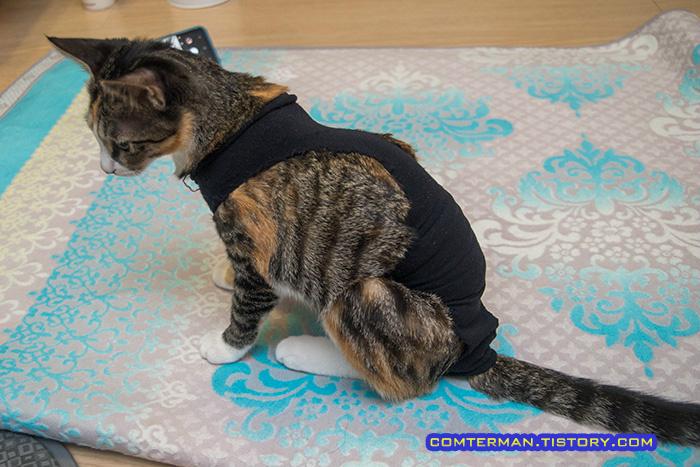고양이 레깅스 환묘복