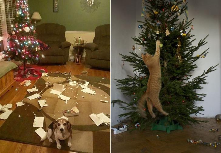 귀여운 강아지와 고양이가 크리스마스를 보내는 방법