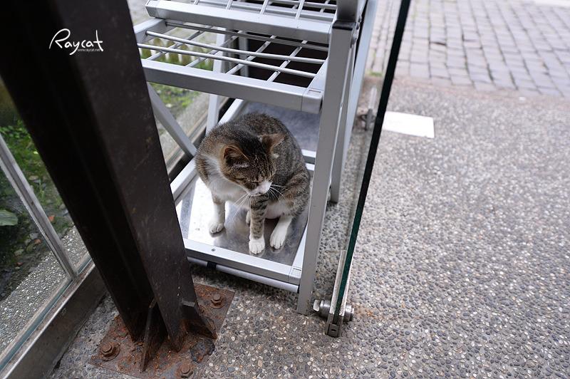 하우통의 고양이